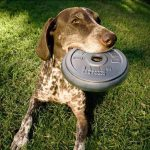 Kuca nosi teg frizbi: reklamiranje Iams pseća hrana: sličica