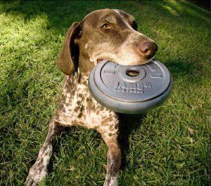 Pas drži frizbi u ustima: reklamiranje firme Iams