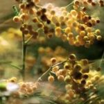 Rat u prirodi protiv polena spora: reklamiranje Johnson & Johnson Benadryl: sličica